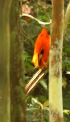 Guyana-0579
