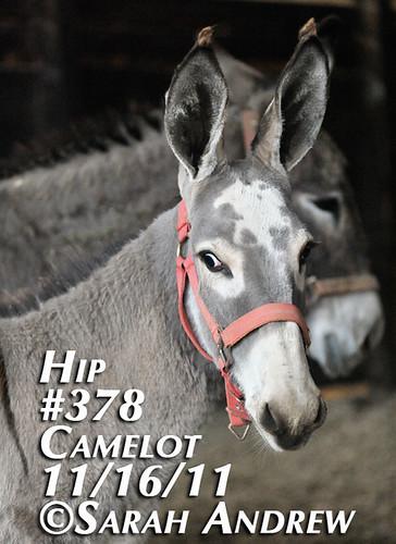 Hip #378
