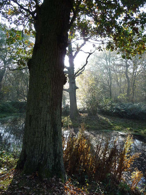 Trees at Rowe's Well 2