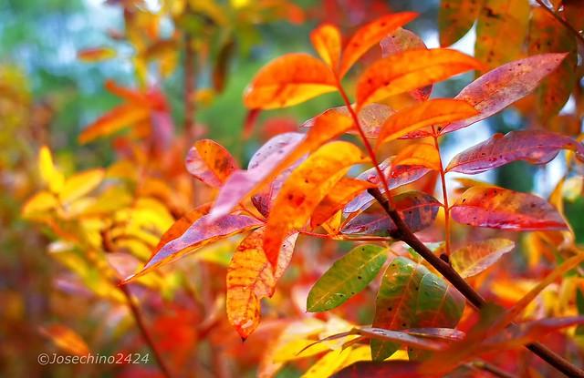 Poniendo color al otoño!!