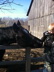 Logan meets a horse