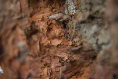 Árvore (3)