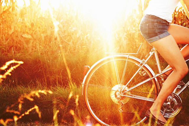 Balade à vélo dans les champs de maïs