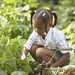 Small photo of Alachua County on the Move Garden Event