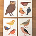 birds postcard set