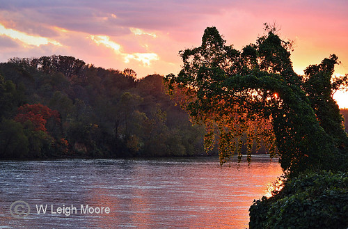 trees sunset reflection tree fall water river tennessee