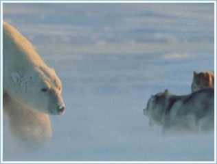 Polar Bear Hugs Dog (1 Of 6)
