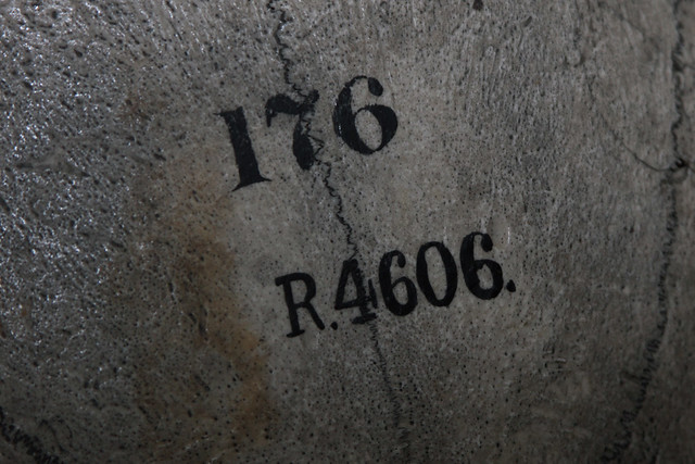 specimen number 176 R.4606