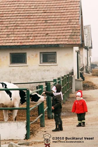 Ferma de lapte