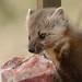 Weasels ripped my flesh