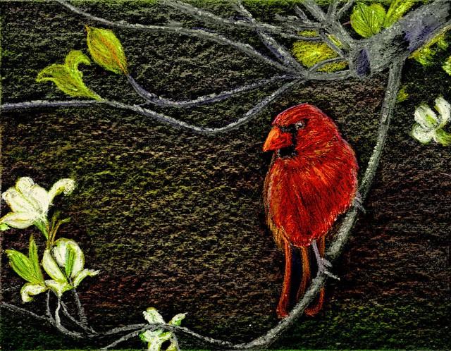 Dogwood Cardinal