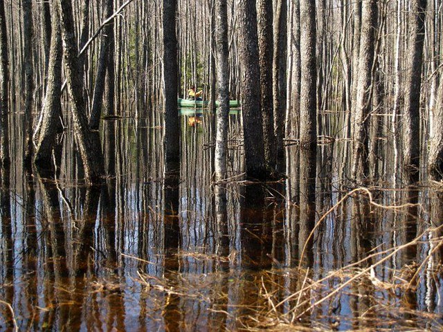 Canoeing in the Flooded Forest
