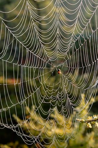 sunrise spiderwebs londonontario siftonbog 201108siftonbog