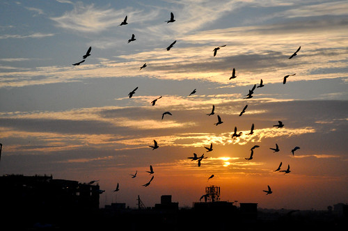 Pigeons Over New Delhi