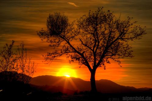 sunset sun tree contrast bayern bavaria gold golden sonnenuntergang sonne kontrast baum hdr 巴伐利亚 chiemgau aschau 阳 mygearandme mygearandmepremium mygearandmebronze alpenbildde