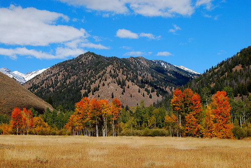 trees mountains fall nature landscapes scenery idaho pines aspens sunvalley woodrivervalley