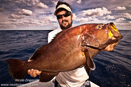 Yellowmouth Grouper (Mycteroperca interstitialis) and not ...Yellow Mouth Grouper