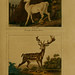 Buffon's Natural history v.6