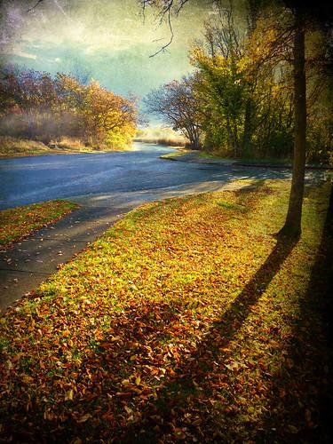 autumn shadow fall leaves victoriabc uplands tatot zedzap