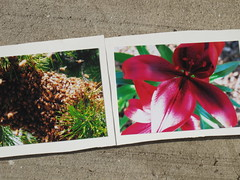 R's Photography entries