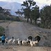Acarreando los animales -Taking the animals home; side road to San Miguel Peras - Camino desde Coicoyán de las Flores hacia San Miguel Peras, Oaxaca, Mexico por Lon&Queta