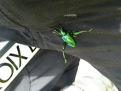Insect on my crotch