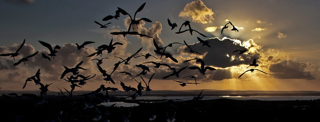 Sky, Gulls And An Island