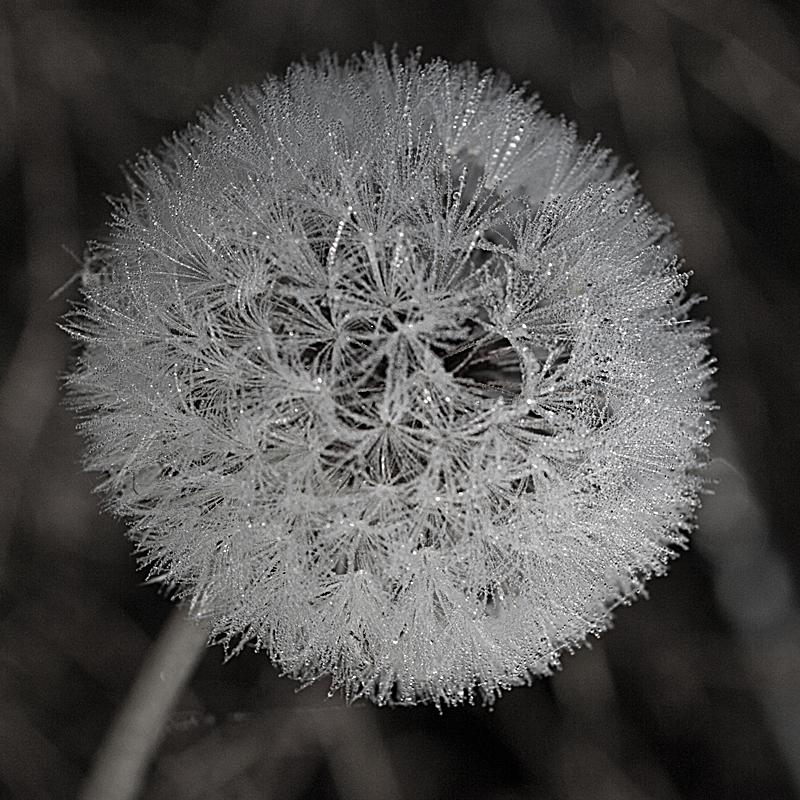IMAGE: http://farm7.staticflickr.com/6228/6365559917_af6ae83c49_o.jpg