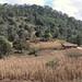 Houses and cornfields - Casas y maizales cerca de San Diego Viejo, camino de Juxtlahuaca hacia San Juan Mixtepec (Región Mixteca), Oaxaca, Mexico por Lon&Queta