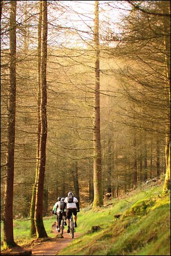 Afan and Brechfa - Wales 2011 by willsimmons