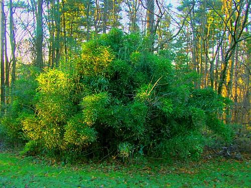 plant nature bush