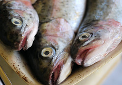 cod(0.0), forage fish(0.0), red snapper(0.0), sardine(0.0), milkfish(0.0), fish(1.0), fish(1.0), seafood(1.0), oily fish(1.0), food(1.0),