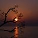 Great Lake Morning by Tammy Lynn D