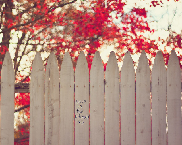 {Words of Wisdom} Fence Friday