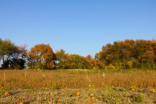 pumpkin pumpkinfarm srj