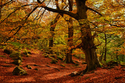 Padley Gorge by atomstitcher