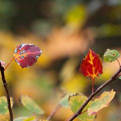 Herbst-090.jpg