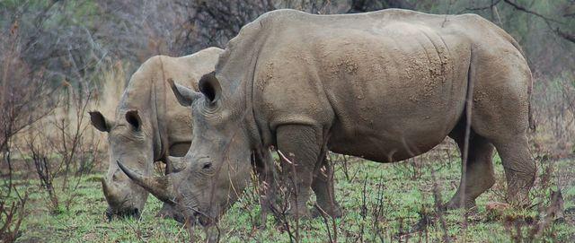Rhino''''''''''''''''s 640x271