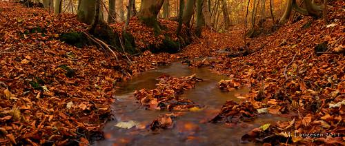 autumn tree fall water leaves forest denmark leaf long exposure mathias stram laugesen