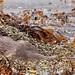 Dog Otter @ Mull