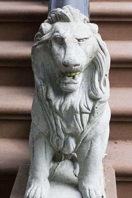 Lions like peas, yo