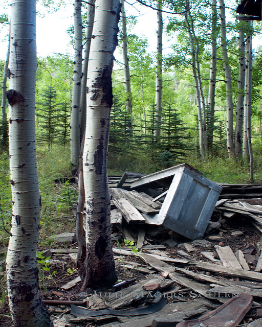 Ruins of a derelict mountain cabin spew out into an aspen and pine forest in the remote northern Colorado Rocky Mountains.