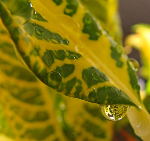 croton water drop uncropped
