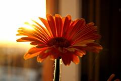 Vim lhe trazer uma flor... estou com saudades!/ I came to bring a flower, I miss you!
