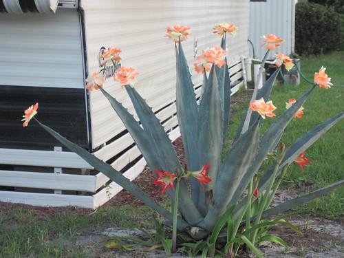 Fake flowers in Florida