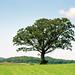Oak Tree Blue by Alan Yahnke