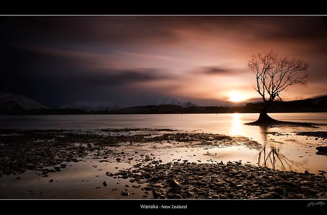 Lone Tree - Wanaka 2