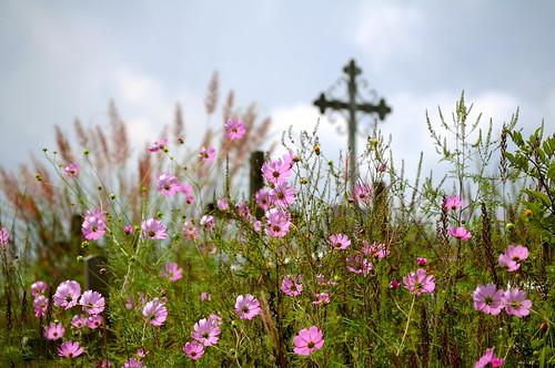 Beauty in the graveyard by amalakar