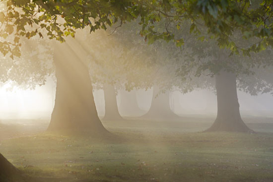 Misty autumn morning by the Thames at Oxford - mysterious woods