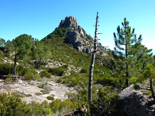 Sentier Capeddu-Sari : arrivée au col en vue de Punta Balardia